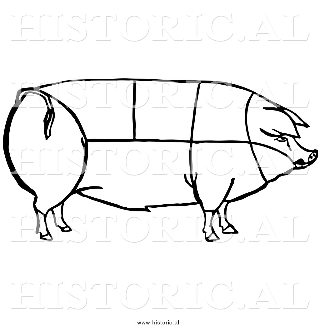 Clipart Of A Pig With Outlined Cuts Of Pork Chart Black And White Line Drawing By Picsburg 9279