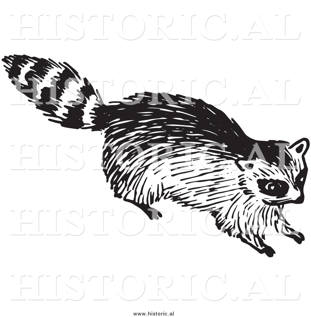 Clipart of a Young Raccoon  Raccoon Clipart Black And White