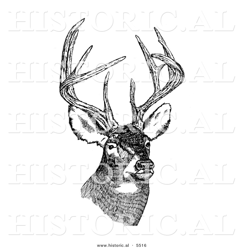 Deer illustration black and white - photo#1