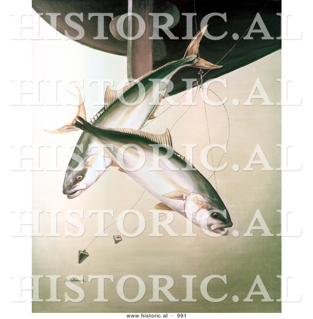 Historical Illustration of Yellowtail Fish (Seriollalandei