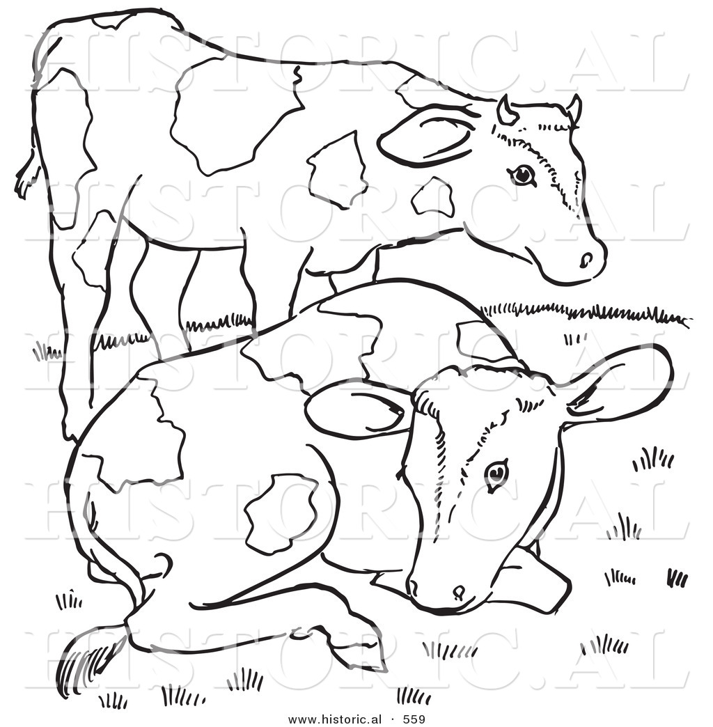historical vector illustration of 2 friendly farm cows outlined version