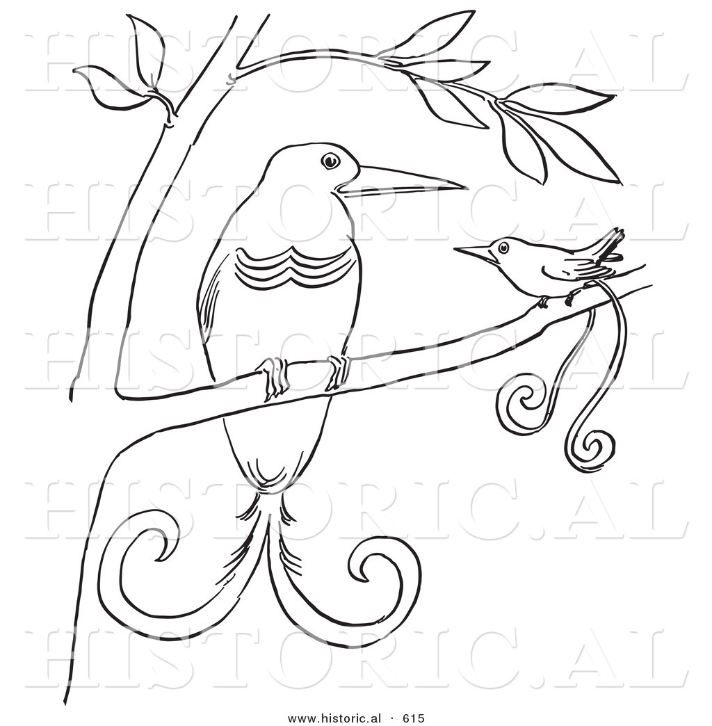 Historical Vector Illustration Of A 2 Birds Paradise In Tree