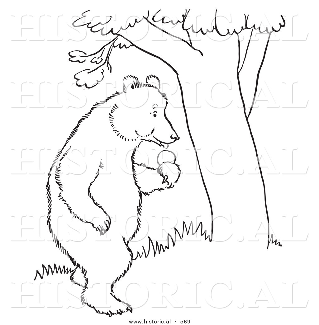 historical vector illustration of a bear standing with an apple