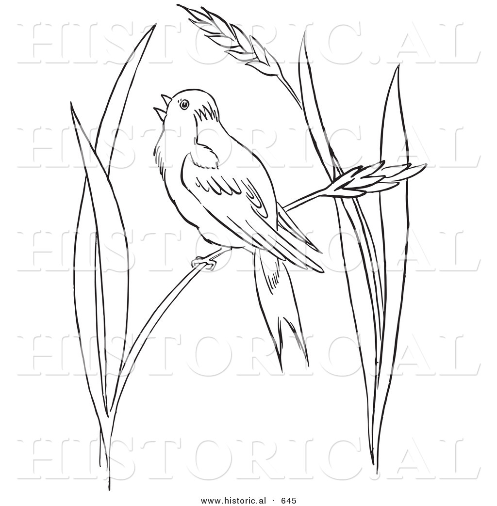 Coloring pages for grass -  Of A Bobolink Bird Perched On Wheat Grass Outlined Version Shawn Michaels Drawings Colouring Pages