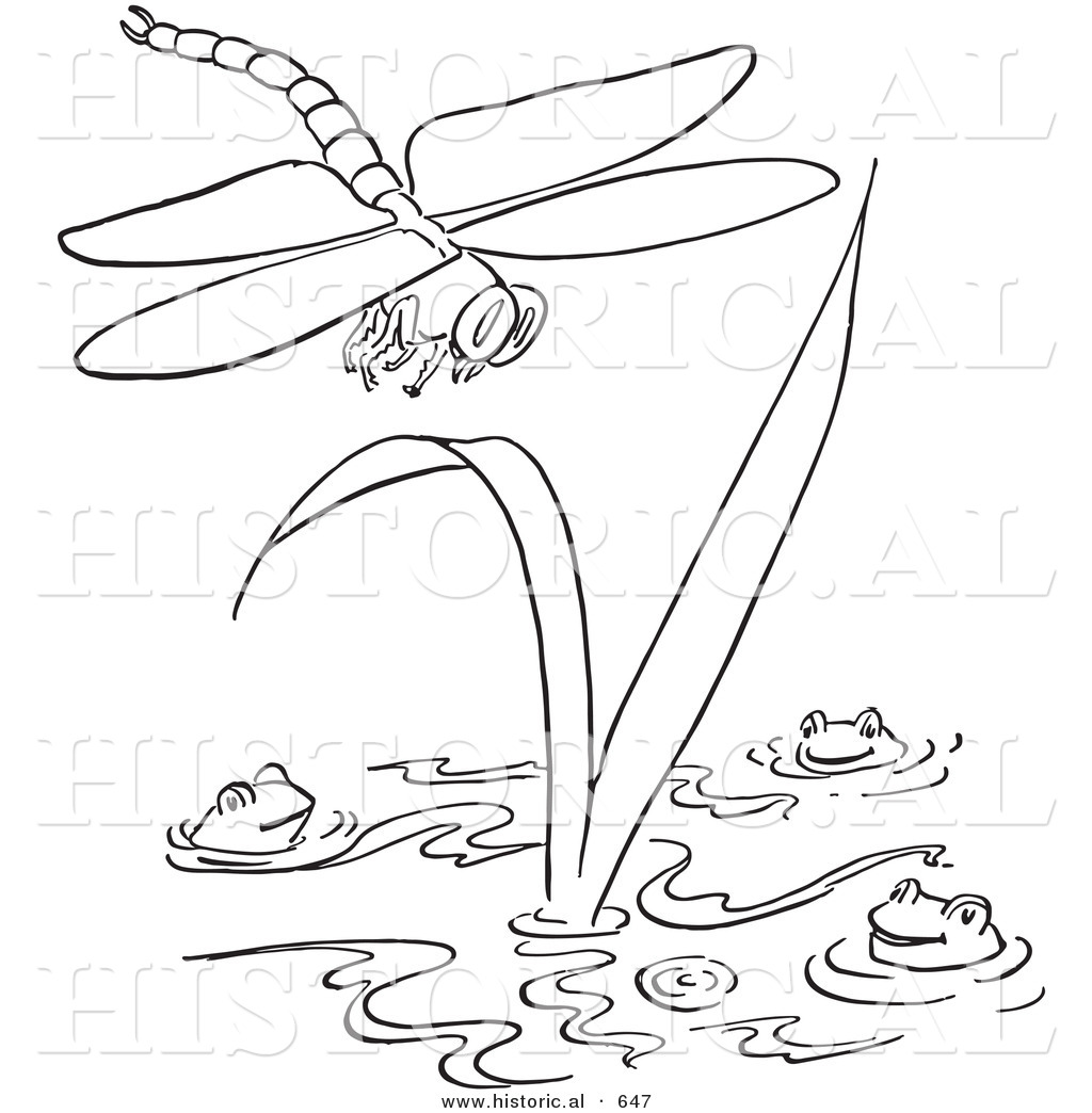 Pond insects coloring pages