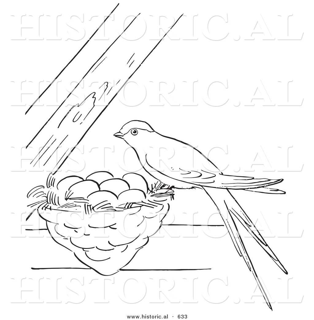 Historical Vector Illustration Of A Female Swallow Bird Perched On Its Nest With Eggs