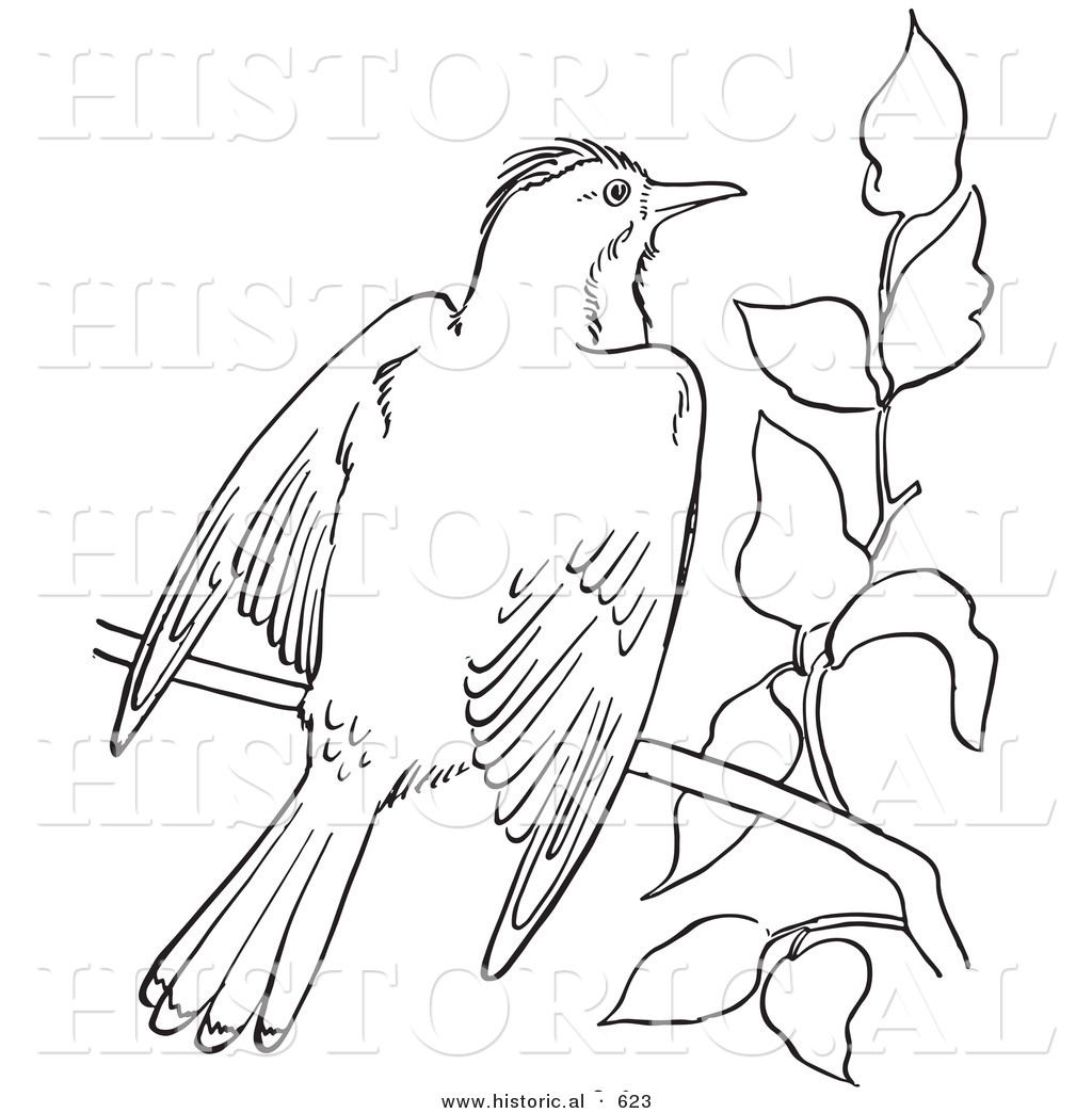 Historical Vector Illustration Of A Kingbird Flapping Wings On Branch