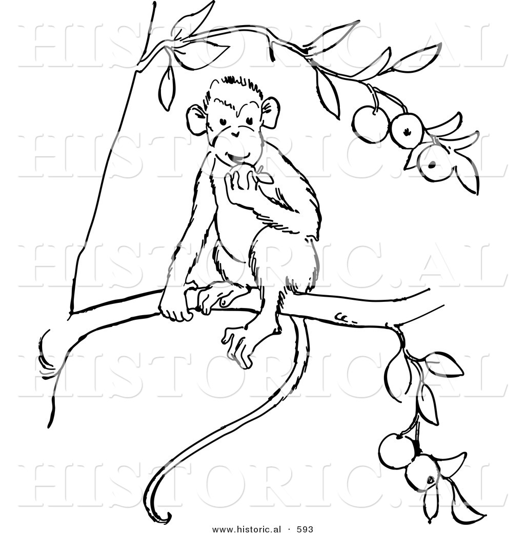 historical vector illustration of a monkey eating fruit on a tree