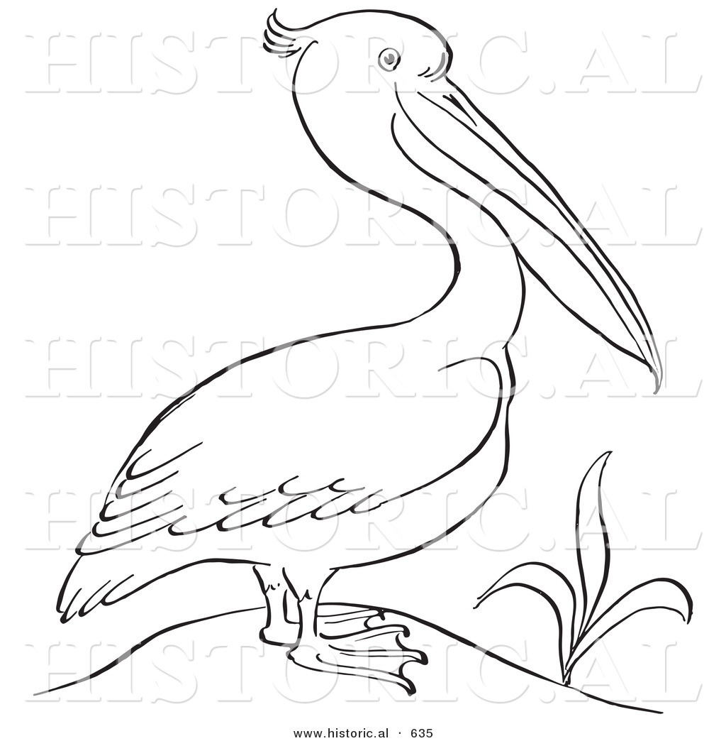 historical vector illustration of a pelican standing beside a plant