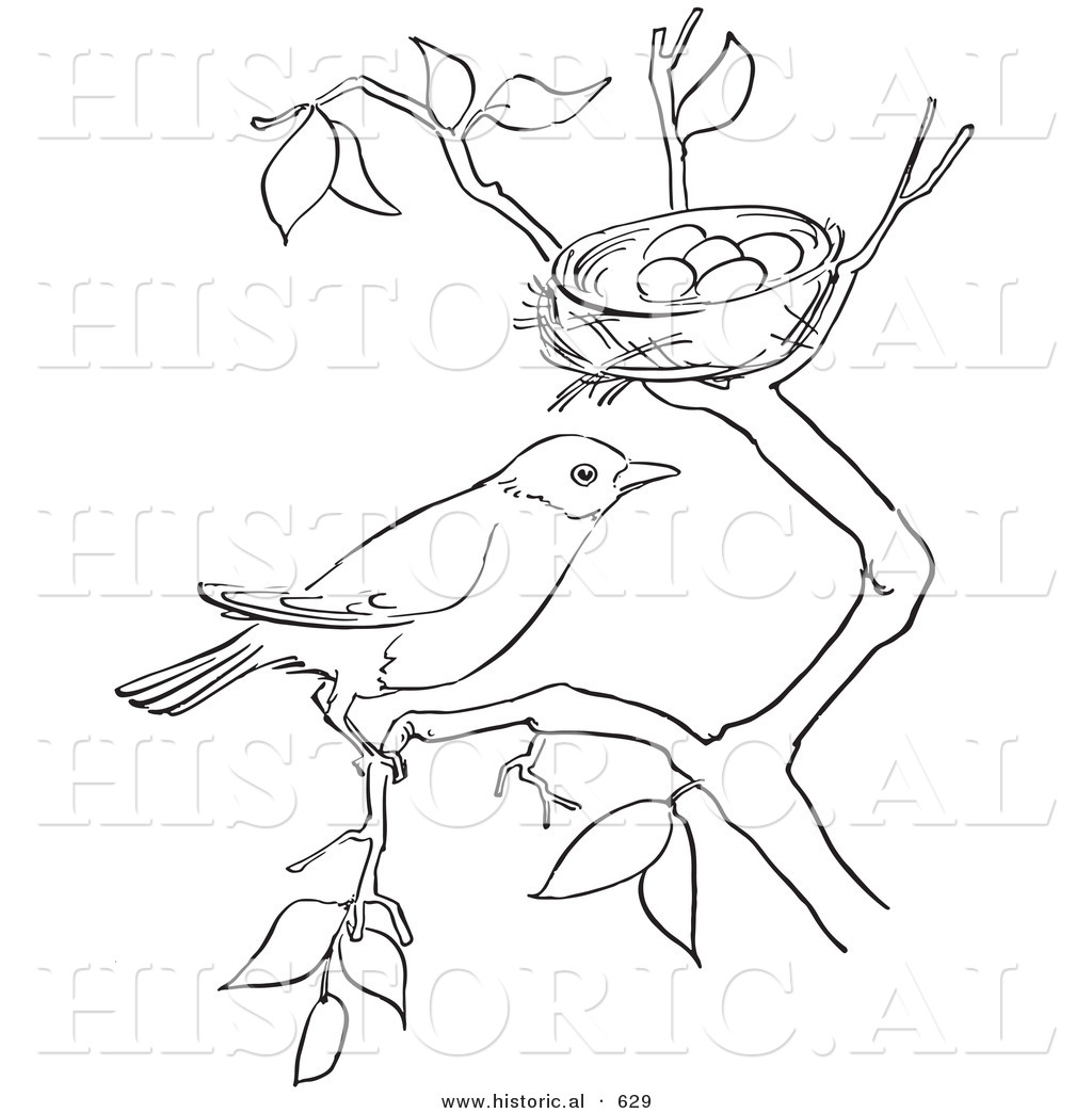historical vector illustration of a robin on a tree branch by its