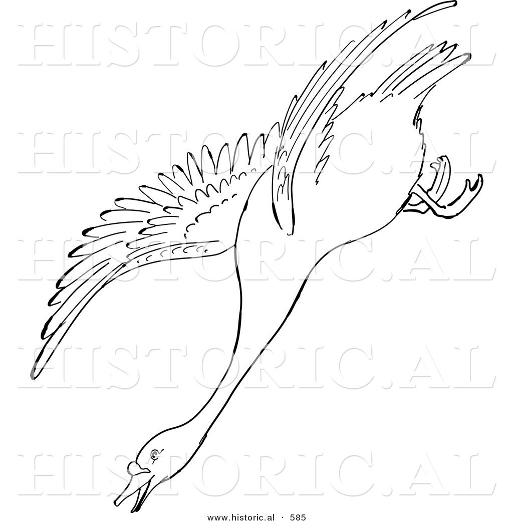 historical vector illustration of a swan descending while flying outlined version