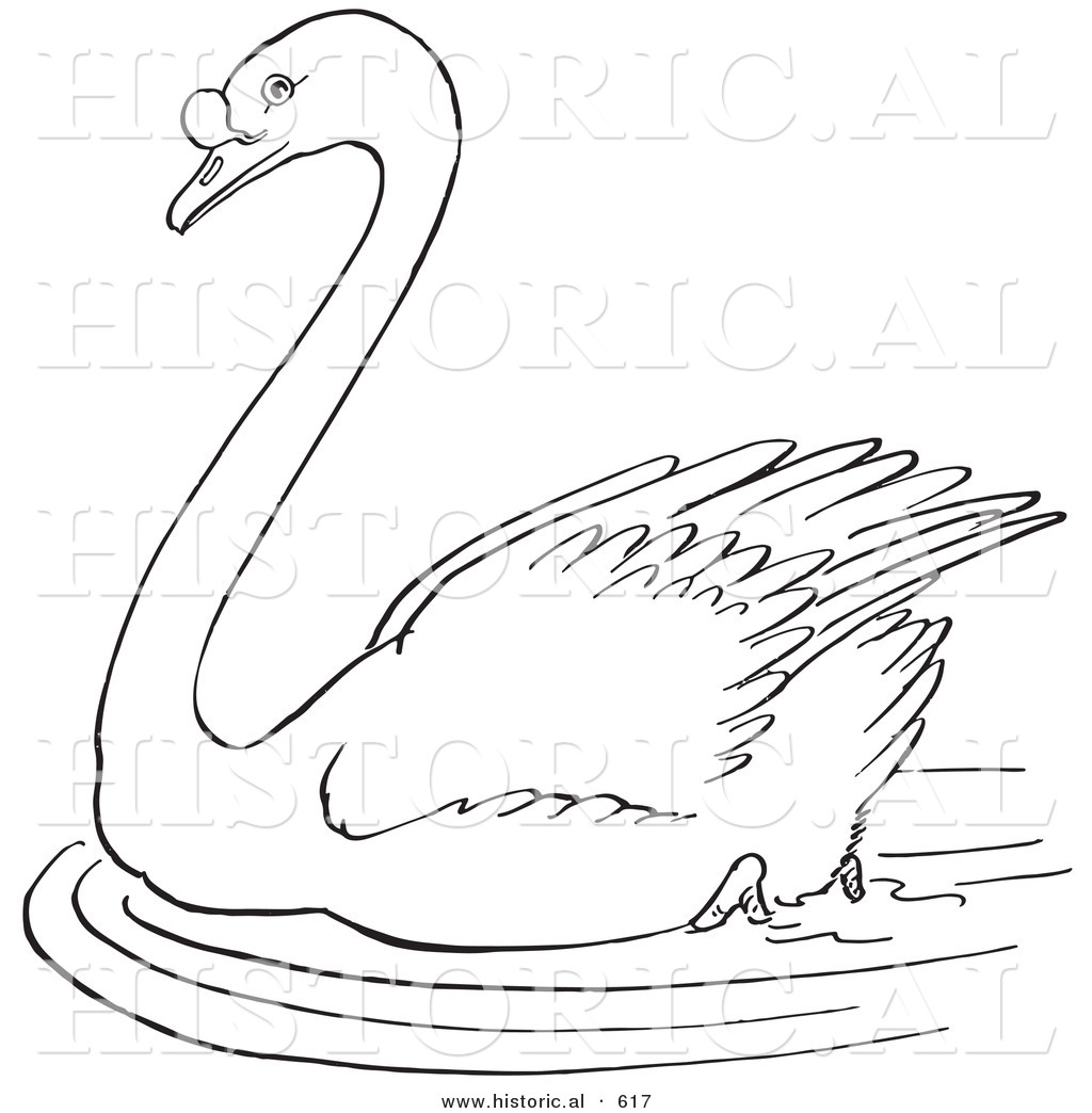historical vector illustration of a swimming swan in a pond outlined version