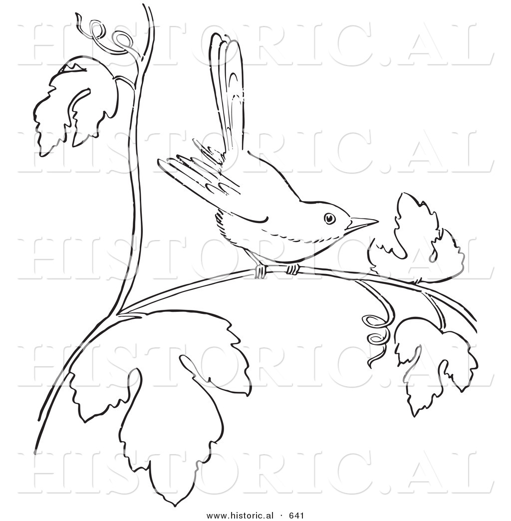 Historical Vector Illustration Of A Wren On Tree Branch With Leaves