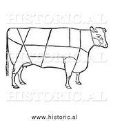 Clipart of a Cow with Beef Cuts Outlined - Black and White Drawing by Al