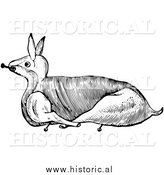 Clipart of a Trussed Rabbit Ready for Roasting - Black and White Line Drawing by Al