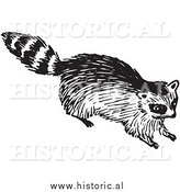 Clipart of a Young Raccoon - Black and White by Al