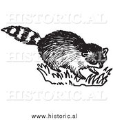 Clipart of a Young Raccoon on Grass - Black and White Drawing by Al