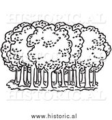 Clipart of Deciduous Trees in a Forest by Al