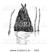 Historical Illustration of a Dabbler Duck Underwater - Black and White Version by Al