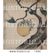 Historical Illustration of a Grasshopper Clinging to and Eating a Persimmon Fruit on a Tree by Al
