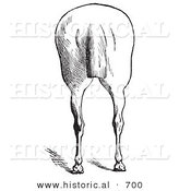 Historical Illustration of a Horse's Anatomy Featuring Bad Hind Quarters from the Rear - Black and White Version by Al