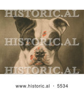 Historical Illustration of a Tough Dog with Bloody Scratches by Al