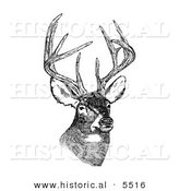 Historical Illustration of a White-tailed Deer (Odocoileus Virginianus) with Antlers Standing and Staring - Black and White Version by Al