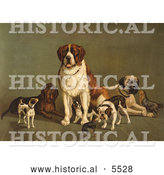 Historical Illustration of Dogs; St Bernard, Hound, Mastiff, Bulldog, Jack Russell Terrier, a King Charles Spaniel and Two Other Little Dogs at the New England Kennel Club's Dog Show by Al