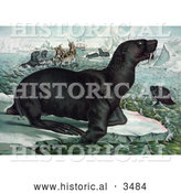 Historical Illustration of Sea Lions on Ice Bergs near Ships by Al