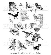 Historical Illustration of Thrushes, Cardinals, Swallows, Warblers, Tanagers, and Woodpeckers - Black and White Version by Al