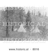 Historical Image of Native American Indian Tipis Under Trees 1910 - Black and White by Al