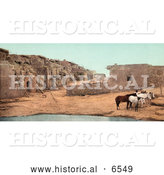 Historical Photo of Brown and White Horses near a Pool of Water at Acoma Pueblo, New Mexico by Al