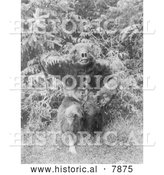 Historical Photo of Man in Bear Costume 1914 - Black and White by Al