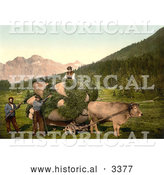 Historical Photochrom of a Cow Pulling a Cart of Hay in Switzerland by Al