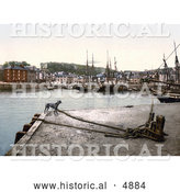 Historical Photochrom of a Dog at the Padstow Quay, Cornwall, England, United Kingdom by Al