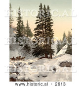 Historical Photochrom of a Horse Drawn Sleigh in Snow, Switzerland by Al