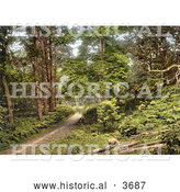 Historical Photochrom of a Man Sitting on the Ground Along a Path Through the Woods in Sheringham Norfolk England UK by Al