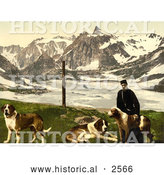 Historical Photochrom of a Man with St Bernard Dogs by Al
