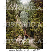 Historical Photochrom of a Path Along the River Lyd in the Lydford Gorge Devon Devonshire England by Al