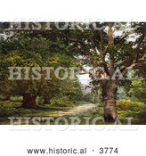 Historical Photochrom of a Path Leading Through Trees in the Ancient Woodland of Burnham Beeches Buckinghamshire London England UK by Al