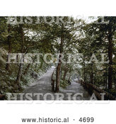 Historical Photochrom of a Trail in the Plantation in Exmouth Devon England by Al