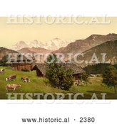Historical Photochrom of Cattle on a Farm in Beatenberg by Al