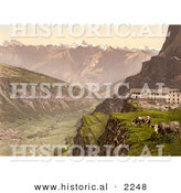Historical Photochrom of Cows by Gemmi Hotel by Al