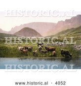 Historical Photochrom of Cows Drinking from a Lake near a Green Pasture and Mountains in England by Al