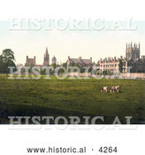 Historical Photochrom of Cows Grasing at Christ Church College and Merton College Oxford Oxfordshire England by Al