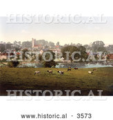 Historical Photochrom of Cows Grazing by a Pond in Carisbrooke Newport Isle of Wight England by Al