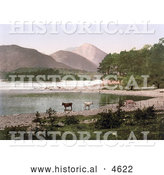 Historical Photochrom of Cows Wading in the Water, Derwent Water, Lake District, England by Al