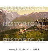 Historical Photochrom of Farmers Milking a Cow in Switzerland by Al