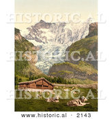 Historical Photochrom of Livestock and Barn near Baregg Glacier, Switzerland by Al