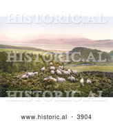Historical Photochrom of Sheep Grazing in a Hilly Pasture near a Lake in England by Al